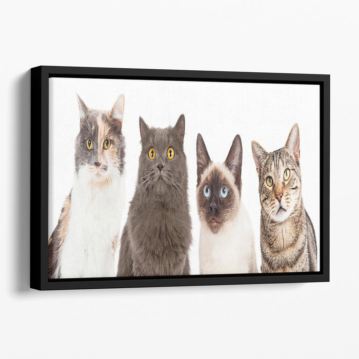 Close-up image of four different breed cats looking forward at the camera Floating Framed Canvas