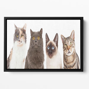 Close-up image of four different breed cats looking forward at the camera Floating Framed Canvas - Canvas Art Rocks - 2