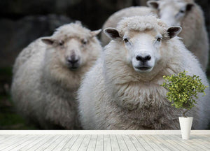 Close up face of new zealand merino sheep in farm Wall Mural Wallpaper - Canvas Art Rocks - 4