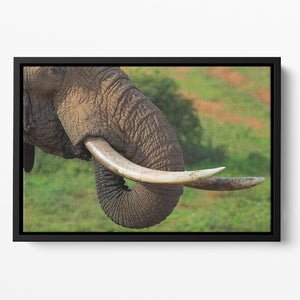 Close up of an African Elephants tusks Floating Framed Canvas - Canvas Art Rocks - 2