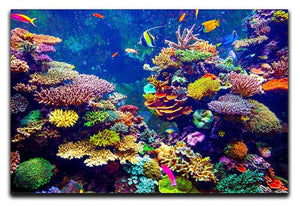 Coral Reef and Tropical Fish Canvas Print or Poster  - Canvas Art Rocks - 1