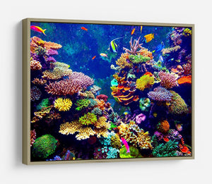 Coral Reef and Tropical Fish HD Metal Print