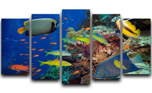 Coral Reef on Red Sea 5 Split Panel Canvas  - Canvas Art Rocks - 1