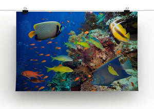 Coral Reef on Red Sea Canvas Print or Poster - Canvas Art Rocks - 2