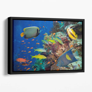 Coral Reef on Red Sea Floating Framed Canvas