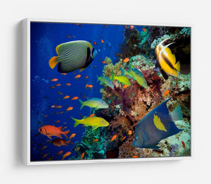 Coral Reef on Red Sea HD Metal Print