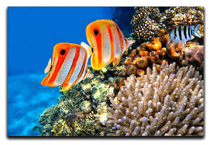 Coral reef and Copperband butterflyfish Canvas Print or Poster  - Canvas Art Rocks - 1