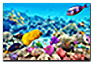 Corals and tropical fish Canvas Print or Poster  - Canvas Art Rocks - 1
