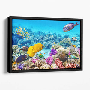 Corals and tropical fish Floating Framed Canvas