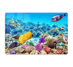 Corals and tropical fish HD Metal Print