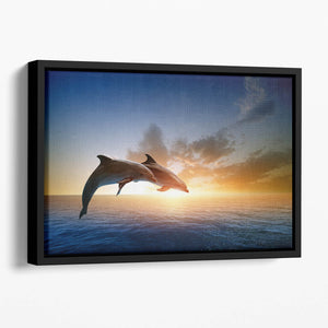 Couple jumping dolphins Floating Framed Canvas