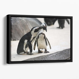 Cute affectionate penguin couple at the zoo Floating Framed Canvas - Canvas Art Rocks - 1