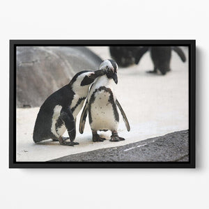 Cute affectionate penguin couple at the zoo Floating Framed Canvas - Canvas Art Rocks - 2