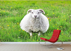 Cute sheep in Iceland staring into the camera Wall Mural Wallpaper - Canvas Art Rocks - 2
