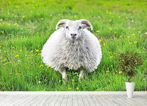 Cute sheep in Iceland staring into the camera Wall Mural Wallpaper - Canvas Art Rocks - 4