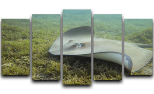 Darkspotted stingray 5 Split Panel Canvas  - Canvas Art Rocks - 1