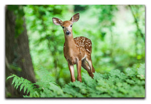 Deer In The Forest Print - Canvas Art Rocks - 1