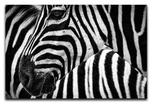 Detailed Zebra Stripes Print - Canvas Art Rocks - 1