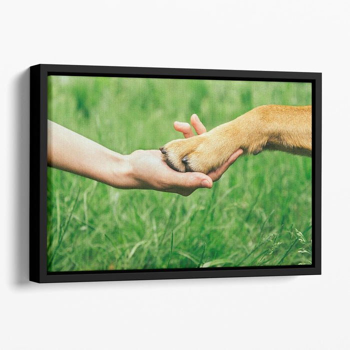 Dog paw and human hand are doing handshake Floating Framed Canvas