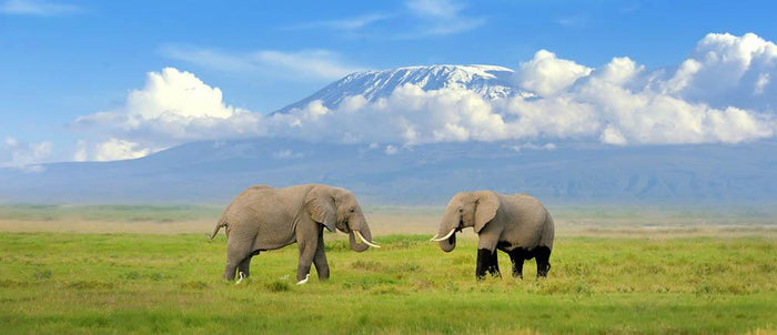 Elephant with Mount Kilimanjaro in the background Wall Mural Wallpaper