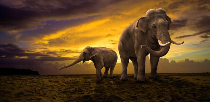 Elephants family on sunset Wall Mural Wallpaper
