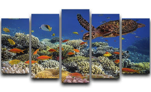 Eretmochelys imbricata floats under water 5 Split Panel Canvas  - Canvas Art Rocks - 1