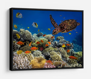 Eretmochelys imbricata floats under water HD Metal Print