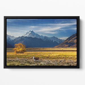 Farmland with grazing cows and Mount Cook on background Floating Framed Canvas - Canvas Art Rocks - 2