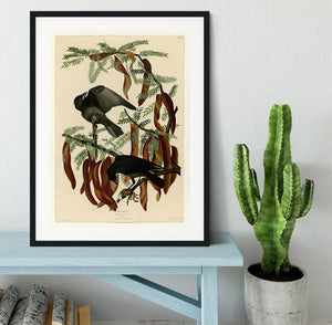 Fish Crow by Audubon Framed Print - Canvas Art Rocks - 1