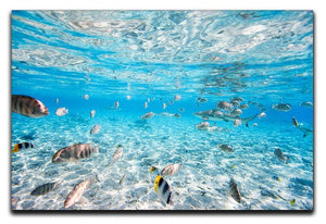 Fish and black tipped sharks Canvas Print or Poster  - Canvas Art Rocks - 1