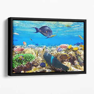 Fish in the Red Sea Floating Framed Canvas