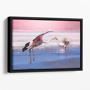 Flamingo in Bolivia Floating Framed Canvas - Canvas Art Rocks - 1
