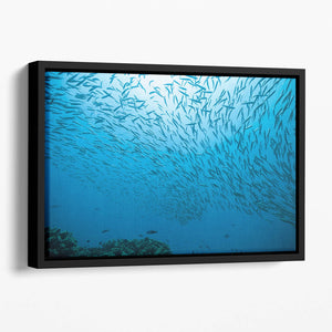 Flock of fish flowing Floating Framed Canvas