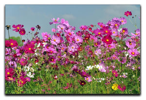 Flower field with blue sky Canvas Print or Poster  - Canvas Art Rocks - 1
