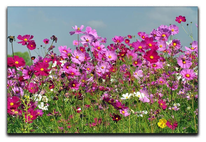 Flower field with blue sky Canvas Print or Poster