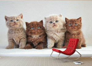 Four various british kittens Wall Mural Wallpaper - Canvas Art Rocks - 2
