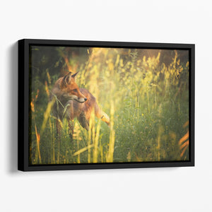 Fox on the summer forest Floating Framed Canvas - Canvas Art Rocks - 1
