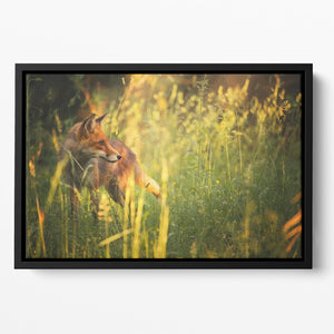 Fox on the summer forest Floating Framed Canvas - Canvas Art Rocks - 2
