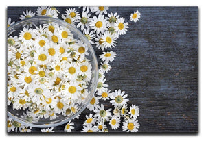 Fresh medicinal roman chamomile flower Canvas Print or Poster  - Canvas Art Rocks - 1