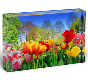 Fresh multicolored tulips in a spring park Acrylic Block - Canvas Art Rocks - 1