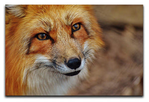 Fuchs Print - Canvas Art Rocks - 1