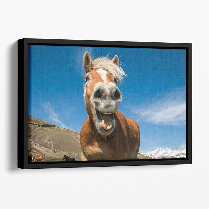 Funny shot of horse with crazy expression Floating Framed Canvas