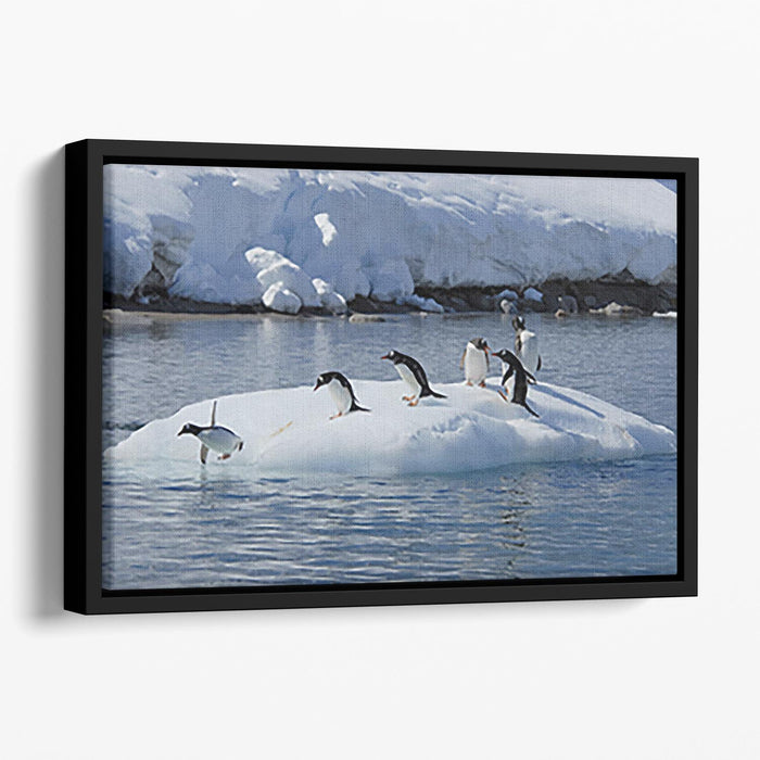 Gentoo Penguin playtime Floating Framed Canvas