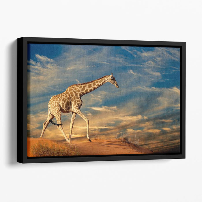 Giraffe walking on a sand dune with clouds South Africa Floating Framed Canvas