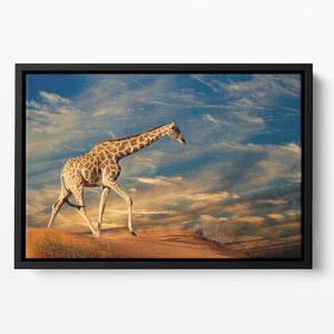 Giraffe walking on a sand dune with clouds South Africa Floating Framed Canvas - Canvas Art Rocks - 2