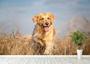Golden retriever dog running outdoor Wall Mural Wallpaper - Canvas Art Rocks - 4