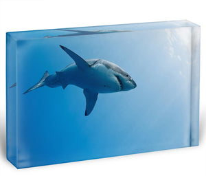 Great white shark Guadalupe Island Acrylic Block - Canvas Art Rocks - 1