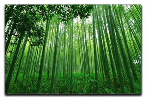 Green bamboo forest Canvas Print or Poster  - Canvas Art Rocks - 1