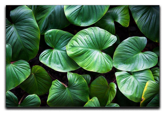 Green plant Canvas Print or Poster