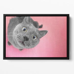 Grey cat sitting on the pink background Floating Framed Canvas - Canvas Art Rocks - 2